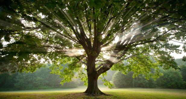 albero-al-sole